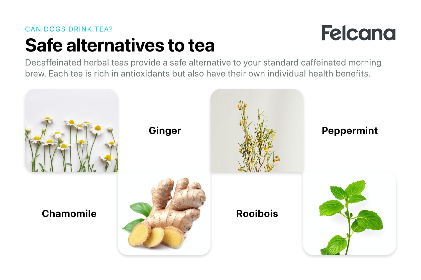 Safe alternatives to tea for dogs, including chamomile, ginger, roobois and peppermint