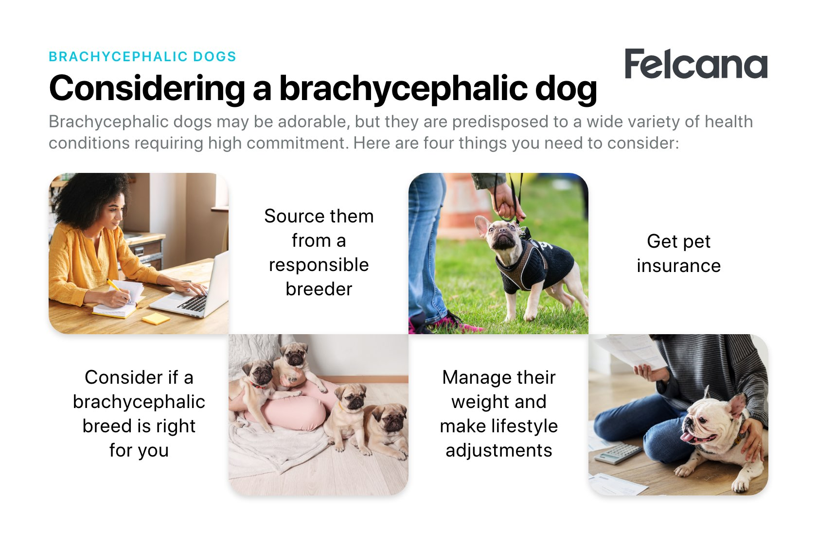 Considering a brachycephalic dog - Consider if the breed is right for you, source from a responsible breeder, make appropriate lifestyle changes and get pet insurance