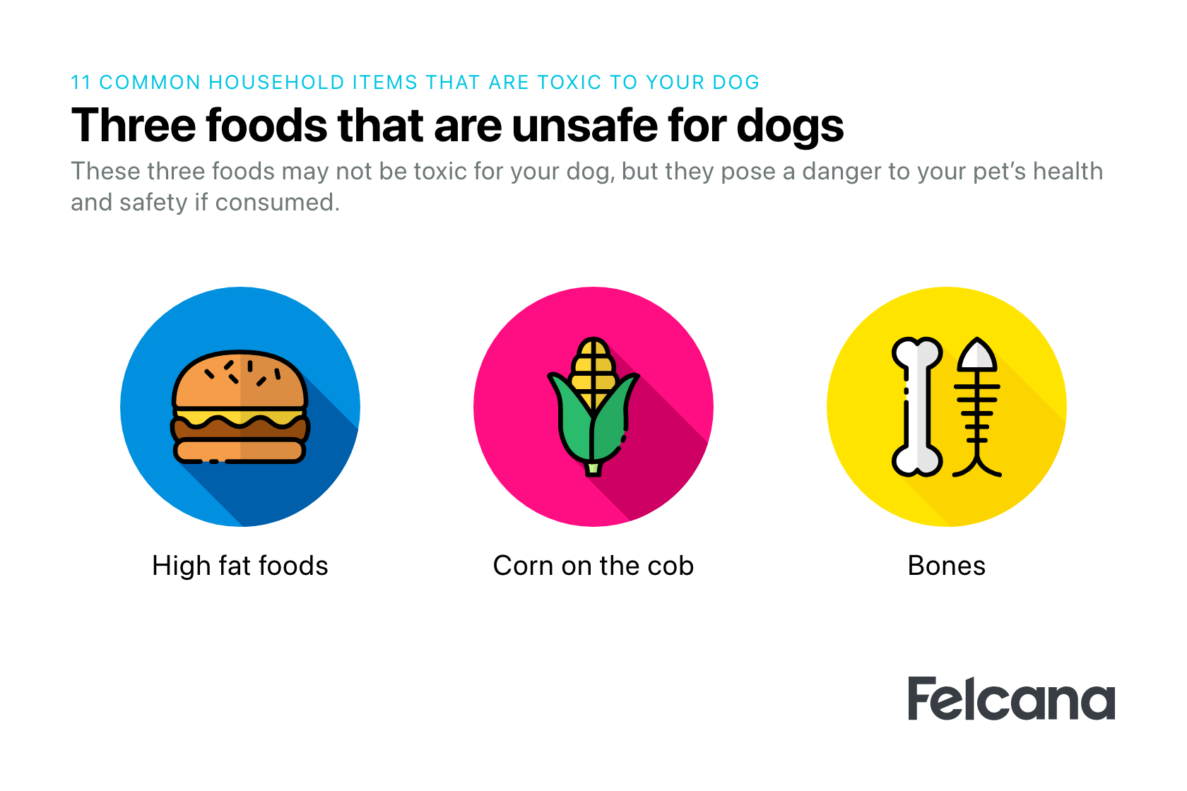 The top 3 most unsafe foods for your dog such as corn on the cob