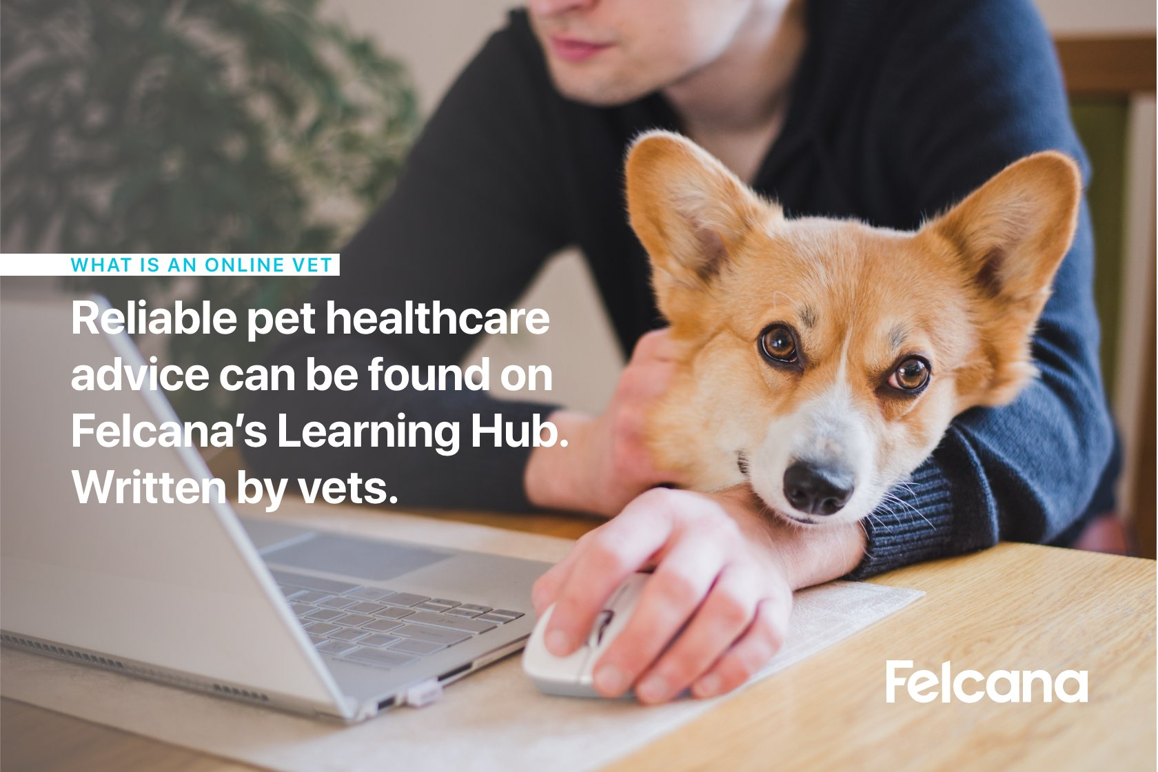Corgi sitting on owner's lap and leaning on their wrist, while owner uses the computer to search for online vet articles