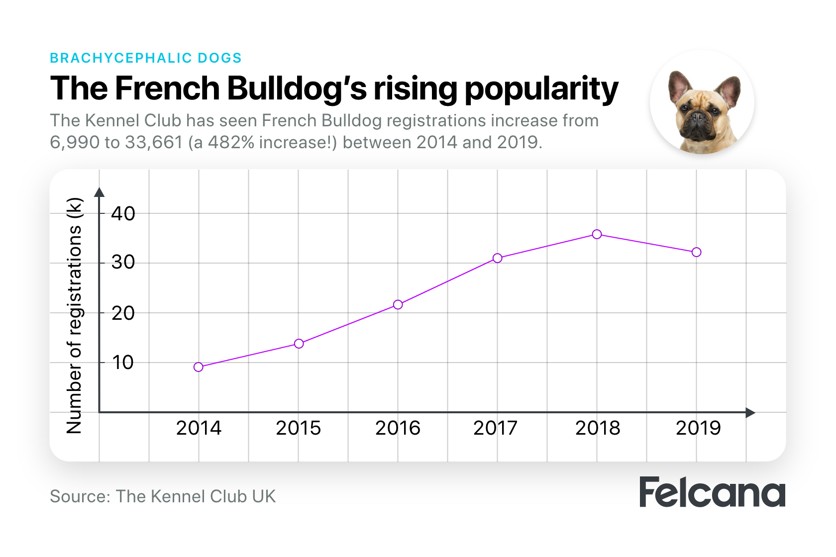 Frenchie's rising popularity from 2014-2019, based on kennel club UK registrations