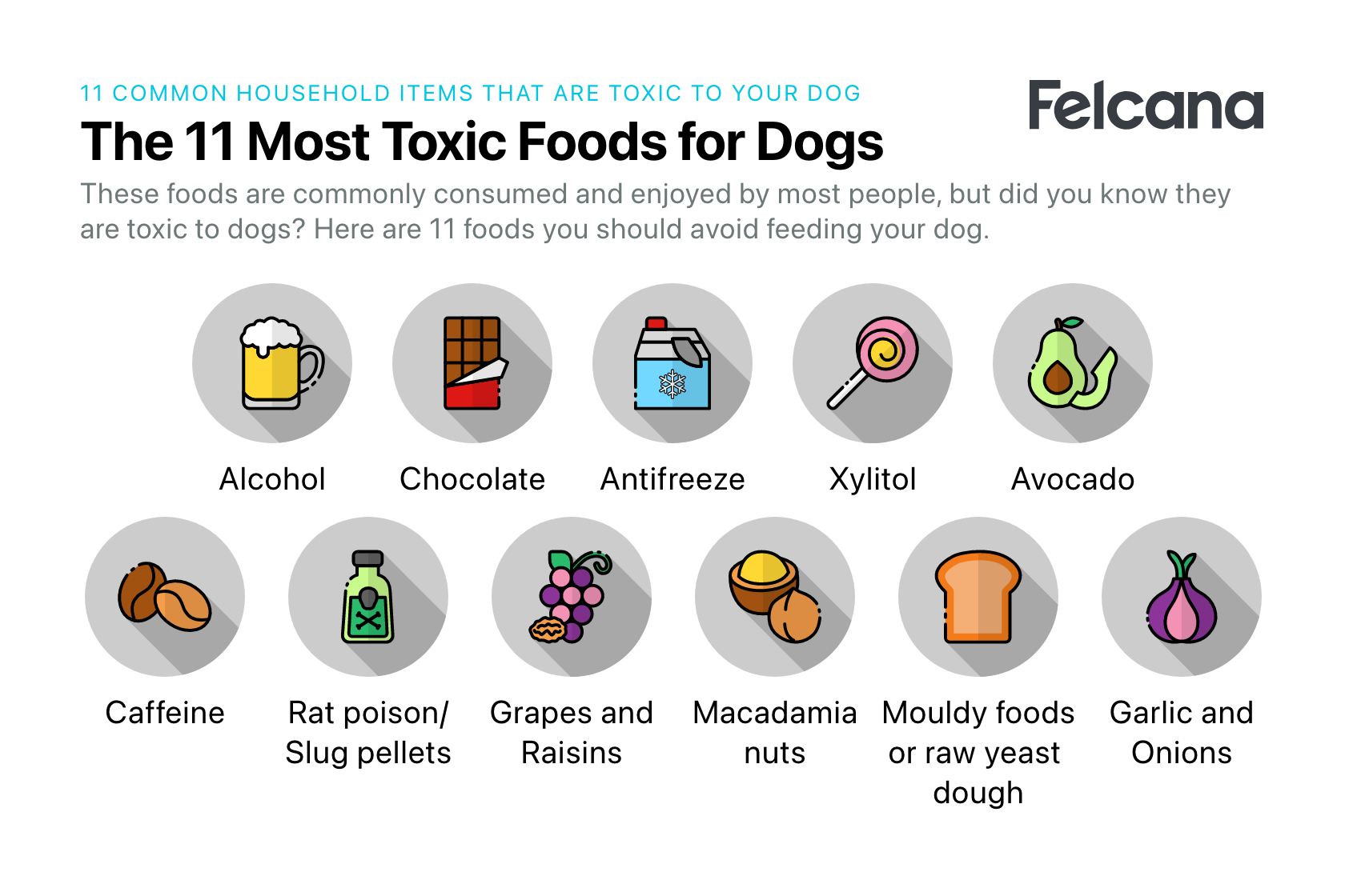11 most toxic foods for dogs including chocolate, alcohol and avocados