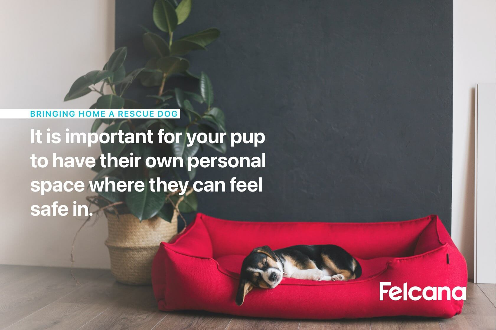 It is important for your pup to have their own personal space where they can feel safe in