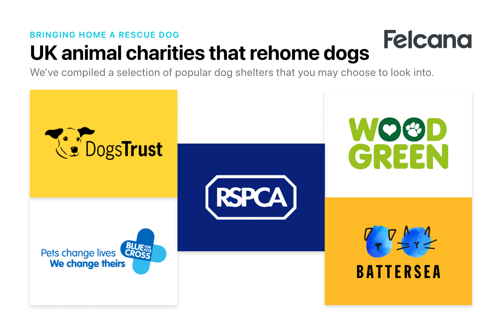 Compilation of popular dog shelters that rehome dogs