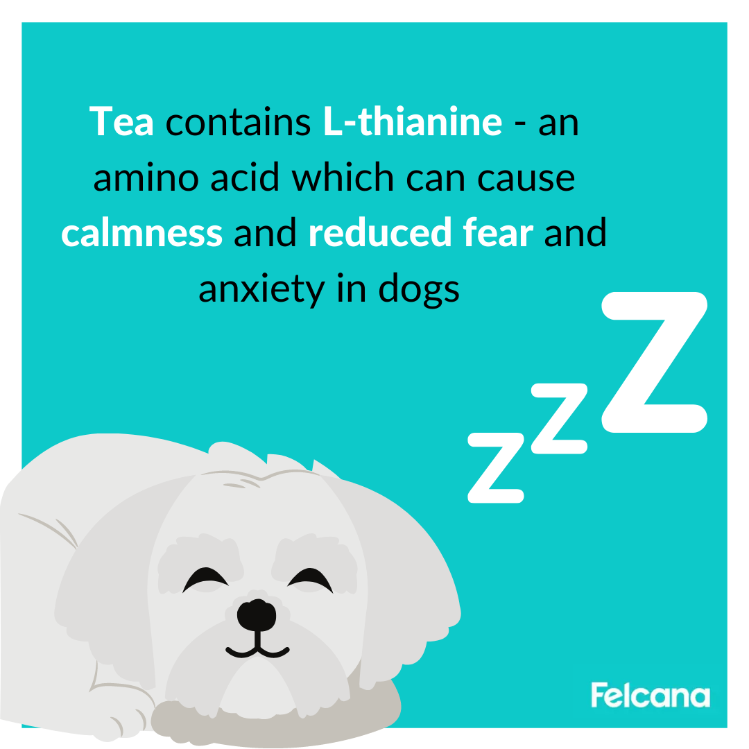 Tea contains L-thianine - an amino acid which can cause calmness and reduced fear and anxiety in dogs