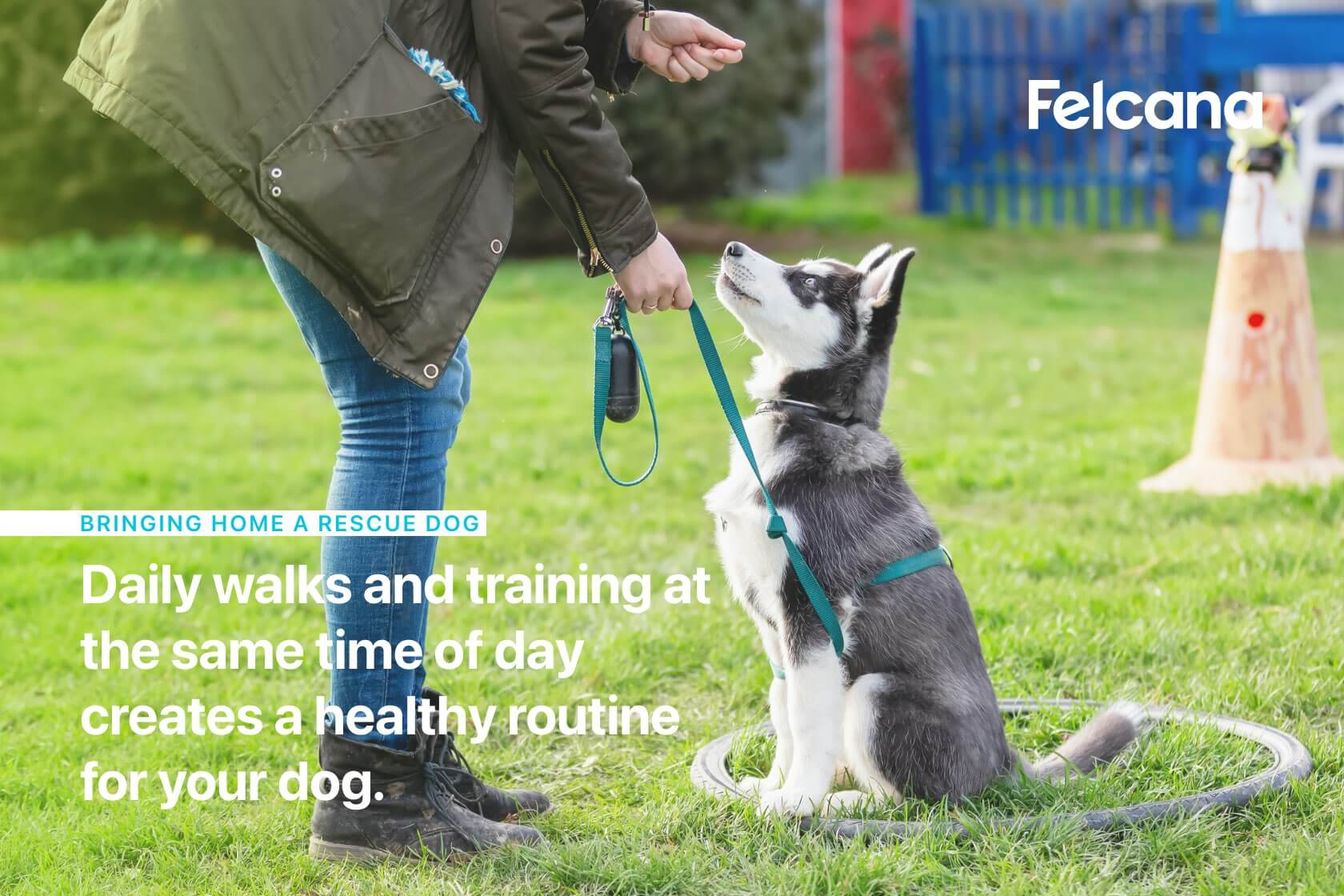 Daily walks and training at the same time of day creates a healthy routine for your dog