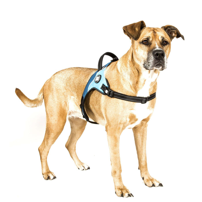 Matrix Power Harness - Sky Blue - Max & Molly Urban Pets