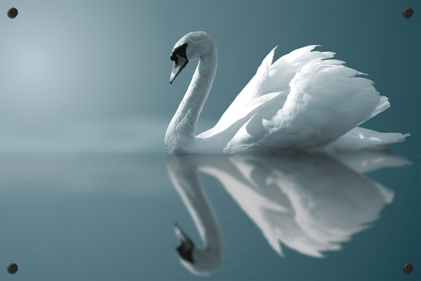 White Swan Outdoor Art Print