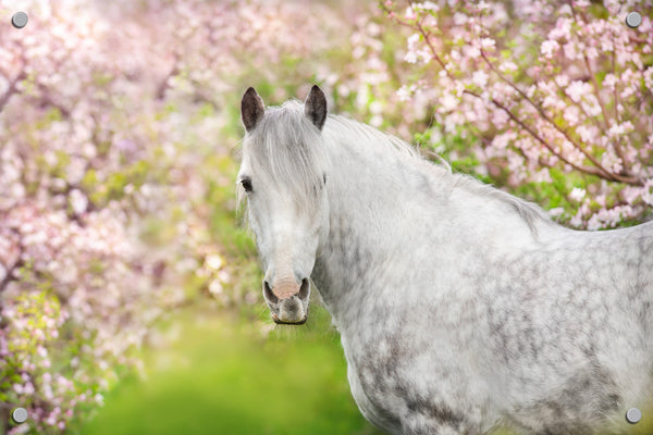 White Horse Outdoor Art Print
