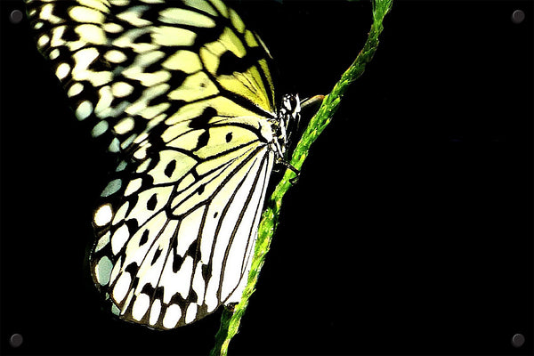 Monarch on Stem 2 - Paula Whitlock