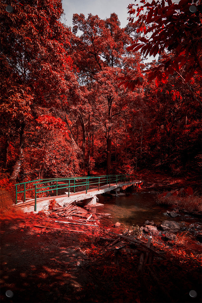 Red Autumn Trees Outdoor Art Print