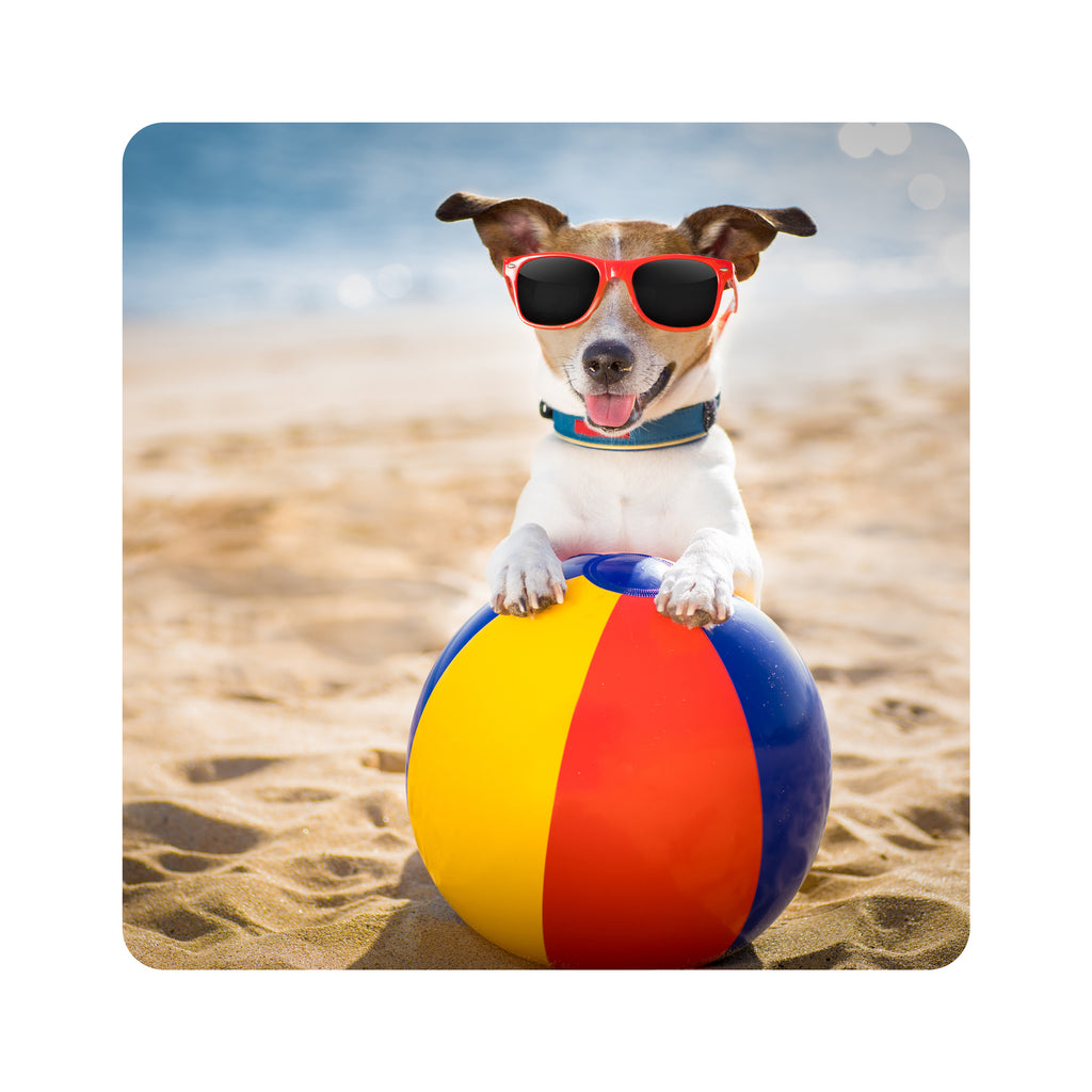 Beach Ball Dog Coasters