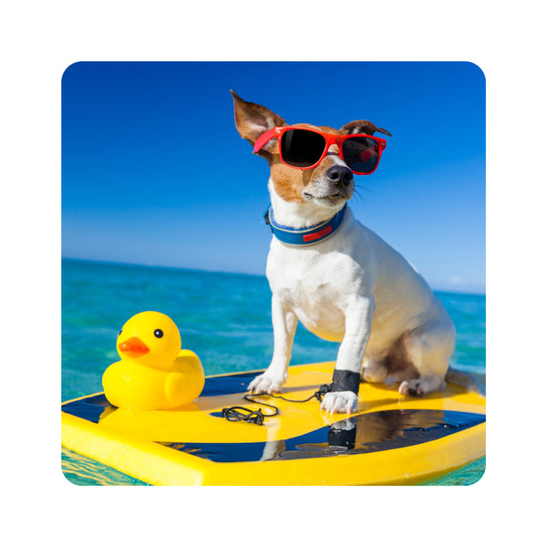 Surfing Dog Coasters