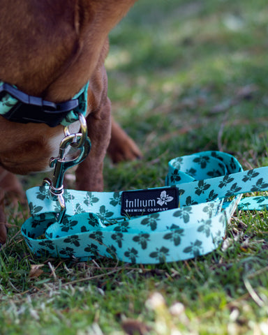 Trillium Dog Leash