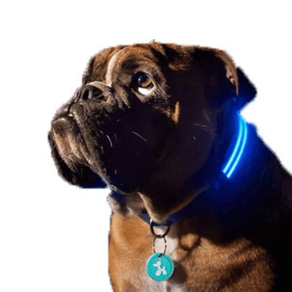 LED Dog Collar - Keep you dog safe at night - Free Shipping