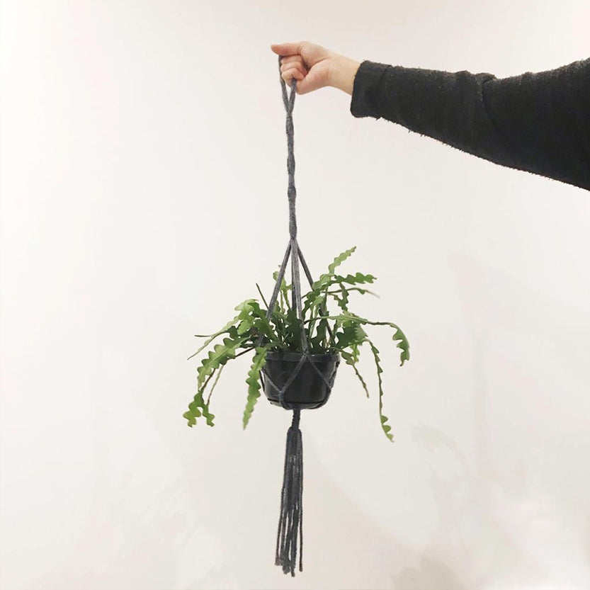 macrame plant pot holder make your own in our class in Leeds