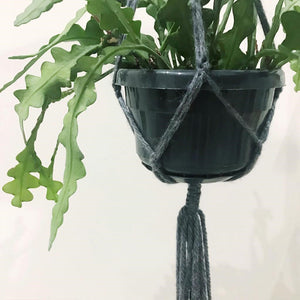 close up of macrame plant hanger from workshop in headingley