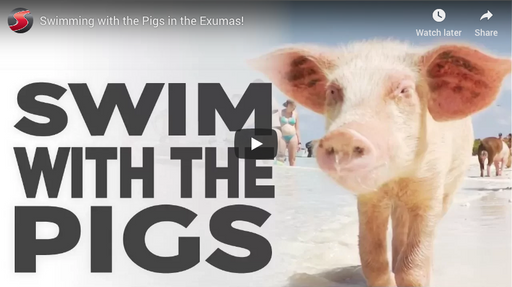 Swimming with the Pigs in the Exumas!