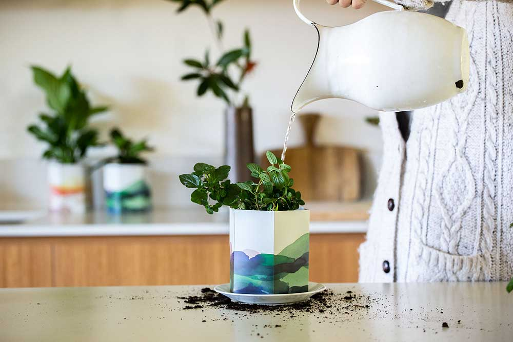 Planter - Sow n Sow Pop up Pots