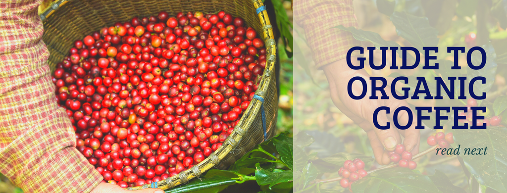 Banner reading: Guide to Organic Coffee