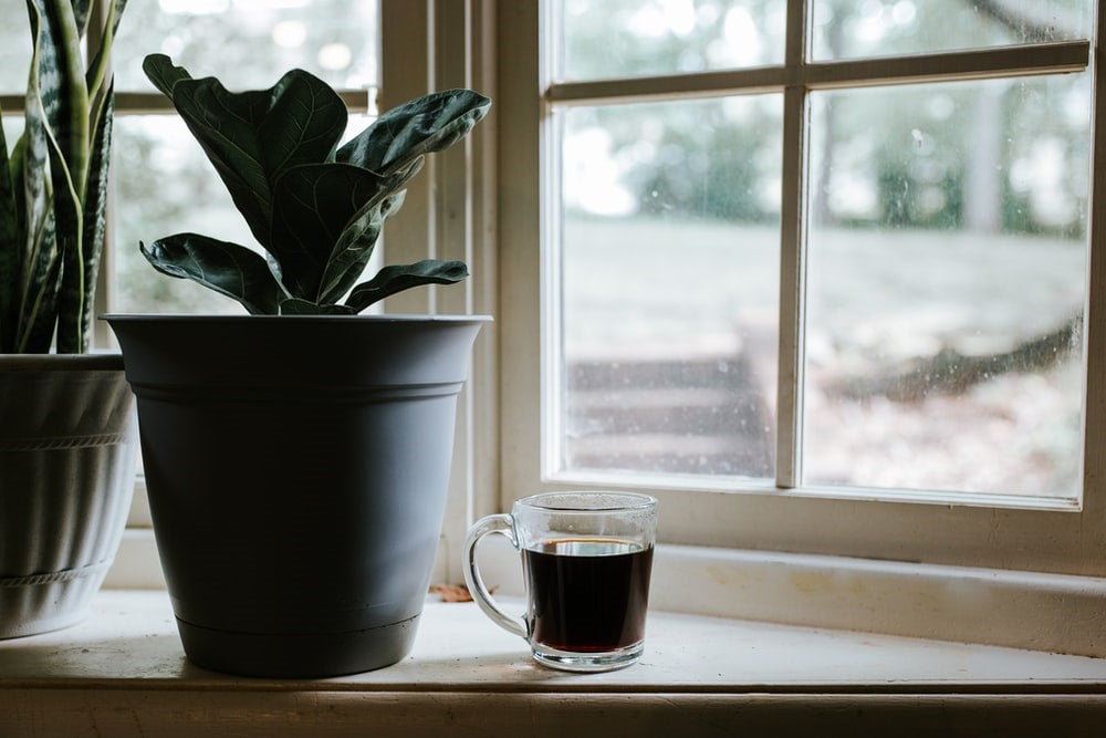 coffee cup next to a plant