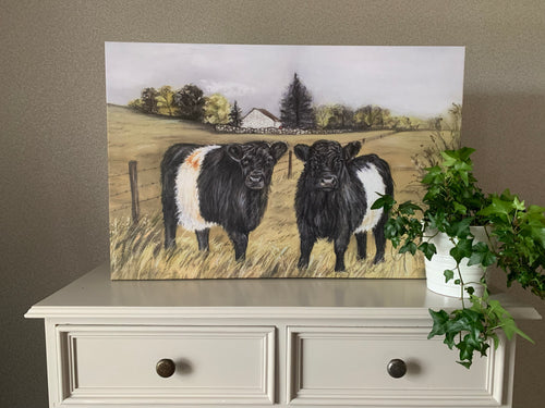 Belted Galloway Oblong Canvas Print