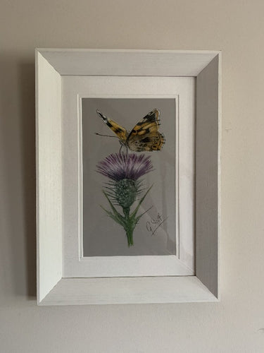 butterfly on scottish thistle original pastel painting by grace scott