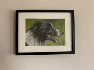 """Working Collie"""