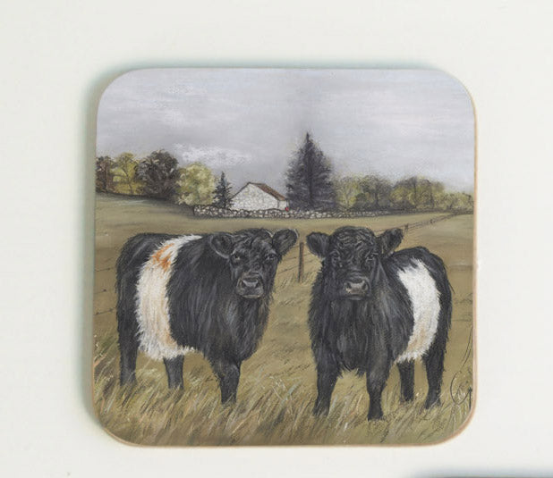 Belted Galloways Coaster
