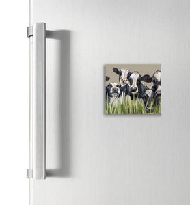 Friesian Cows Through Grass Square Magnet