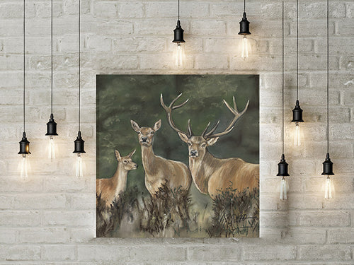 Deer Limited Edition Canvas Print