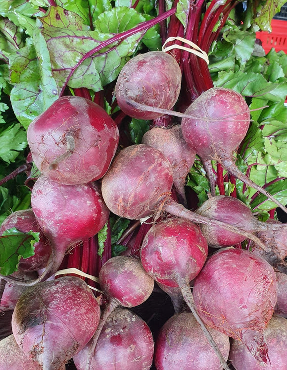 Beetroot fresh dug