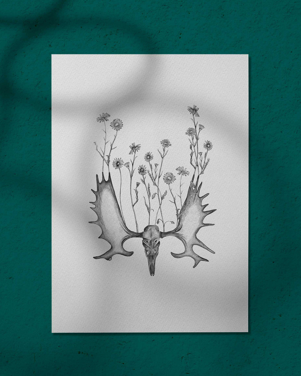 Pushing Up Daisies - print of original illustration on watercolour paper