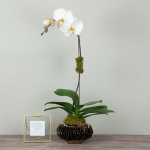 White Orchid in Bronze Planter