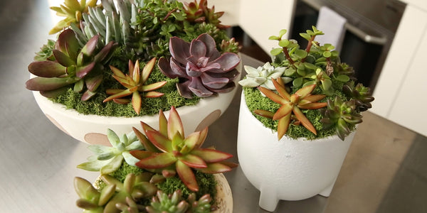 DIY: How To Make A Standout Succulent Arrangement
