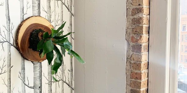 Small Space-Friendly DIY: How to Make a Staghorn Fern Wallhanging