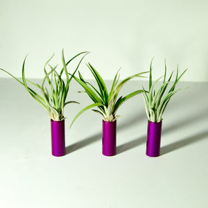 air plants indoor plants tillandsia stand display