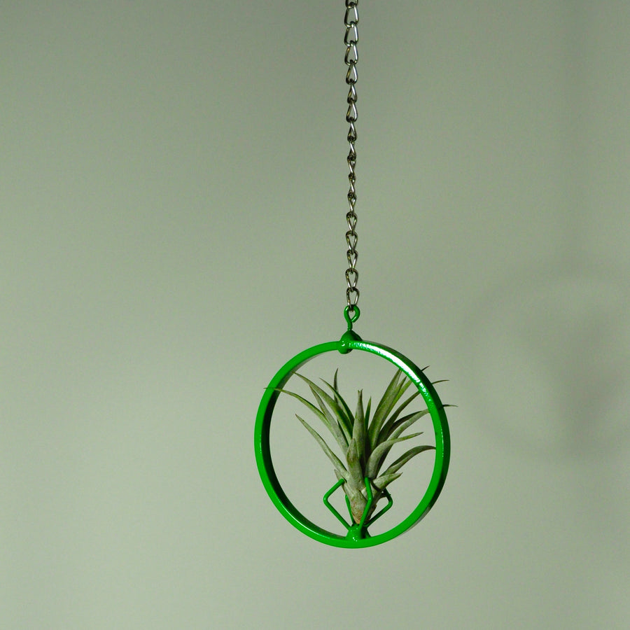 hanging air plant display metal holder chain green vertical garden