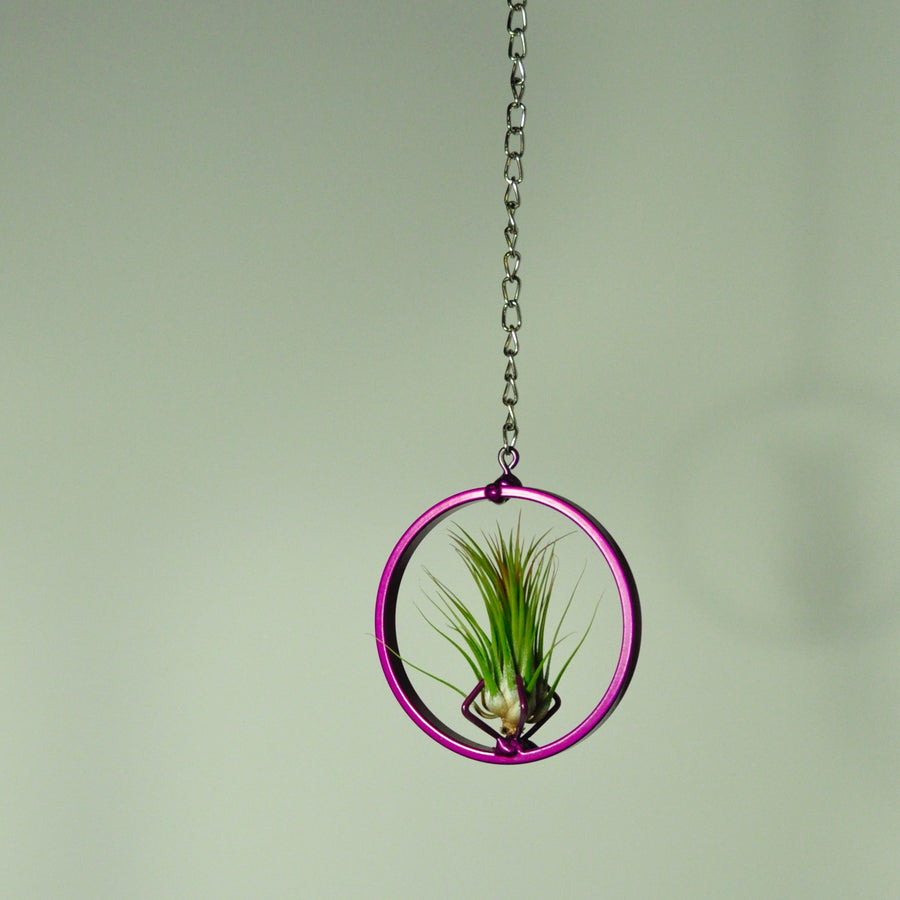 hanging air plant holder purple metal display tillandsia indoor