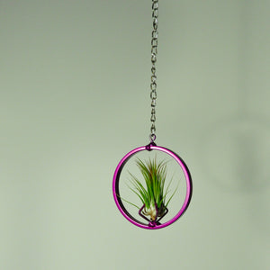 indoor plants air plants tillandsia hanging plants