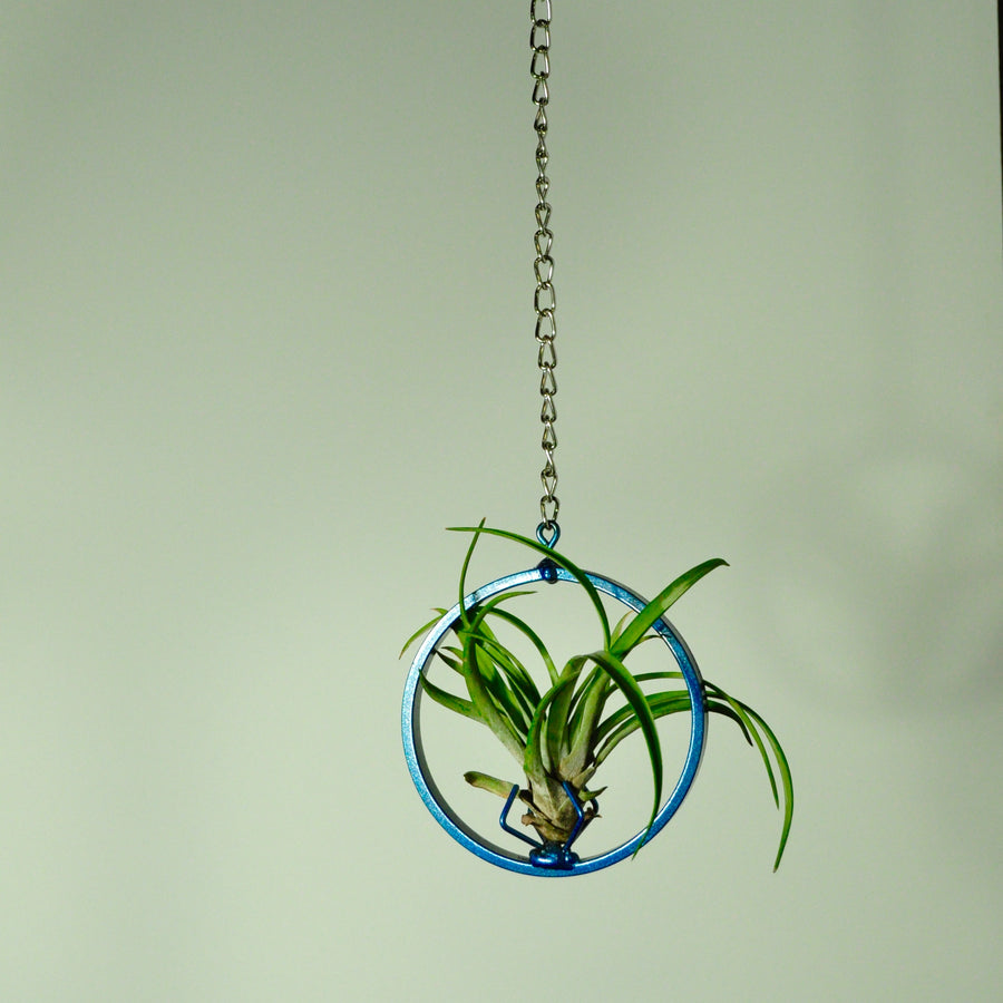 hanging air plant holder metal display chain vertical garden indoor garden