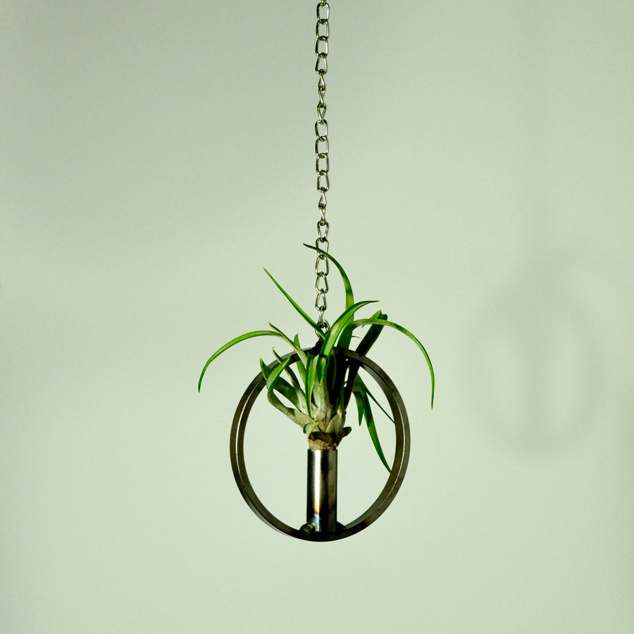 air plants indoor plants tillandsia hanging air plants vertical garden