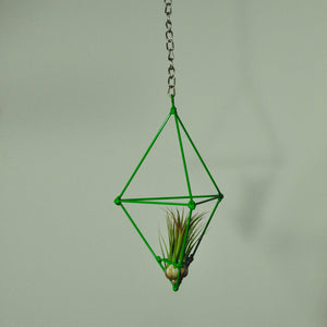 indoor plants air plants for sale tillandsia hanging air plants display