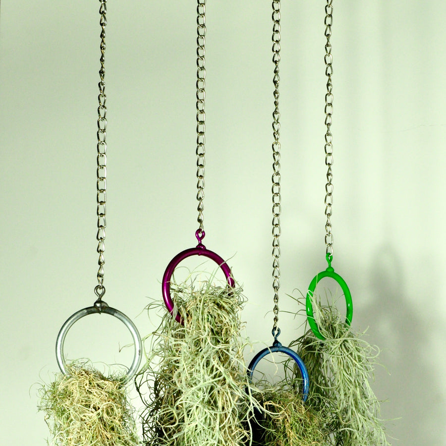 hanging plants air plant holder vertical garden moss display steel rings