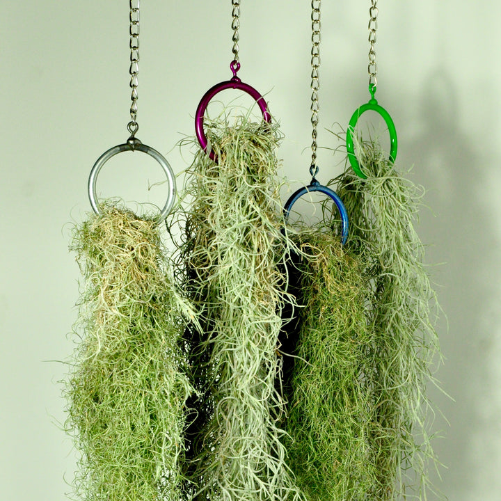 hanging plants air plant holder vertical garden display steel rings
