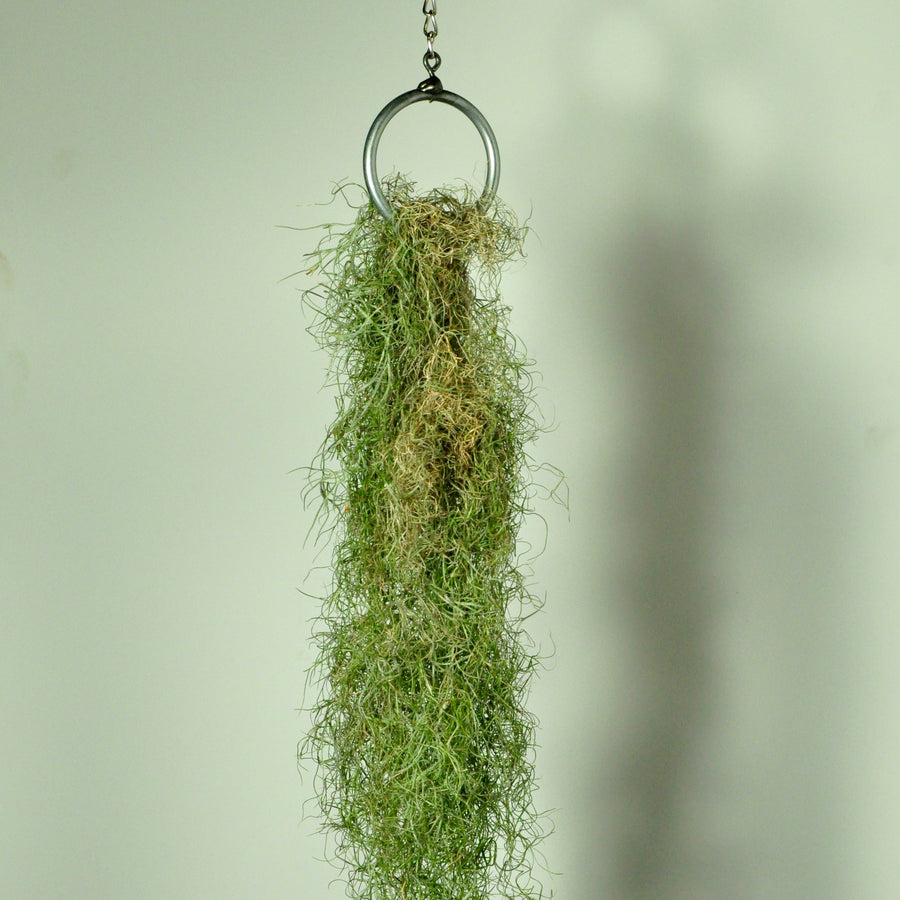 hanging plants air plant holder vertical garden moss display steel ring