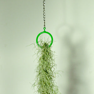 hanging plants air plant display moss indoor vertical garden green metal ring