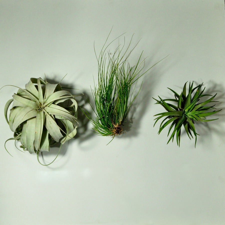 wall plant holder wall mounted planters air plants tillandsia display