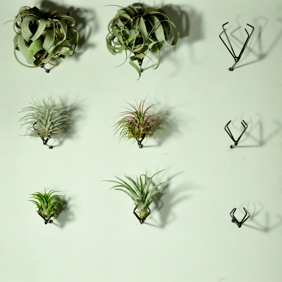 wall planters wall mounted air plant holder claw
