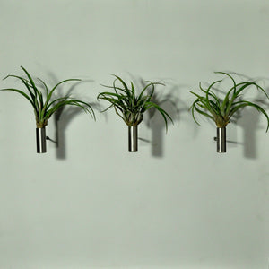 air plants indoor plants tillandsia wall mounted display